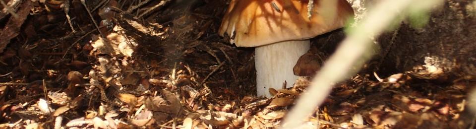 Traiteur,  Chef Privé et Cueillette de champignons
